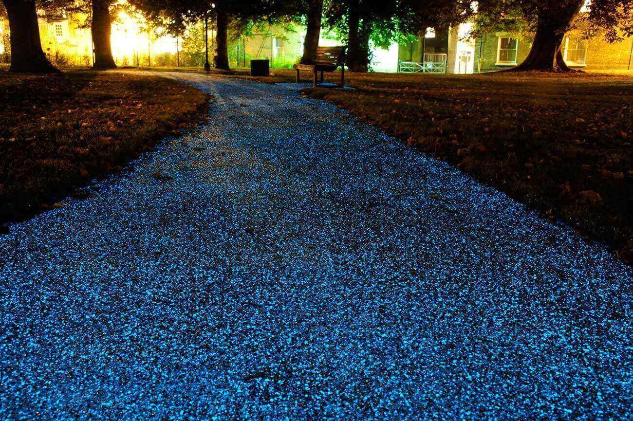 Bioluminescenza: La Nuova Frontiera dell'Illuminazione Sostenibile