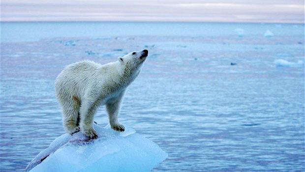 cambiamento climatico orso polare
