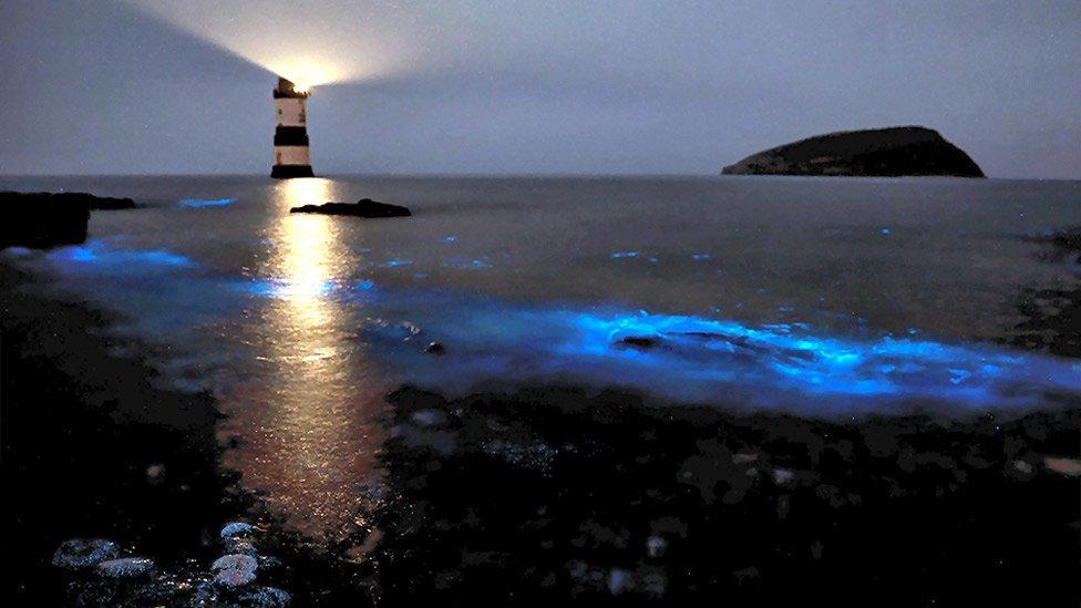 bioluminescenza spiaggia faro