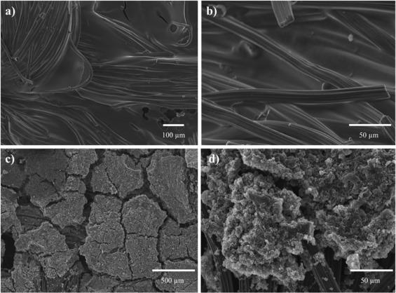 Cosa si Intende per Biomasse Microbiche?