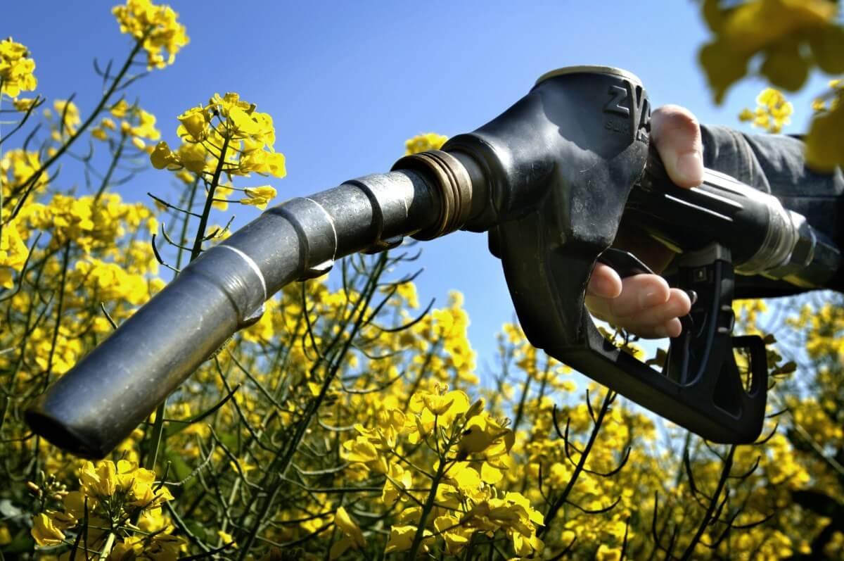 Che Correlazione Esiste tra Biomasse e Biocarburanti?