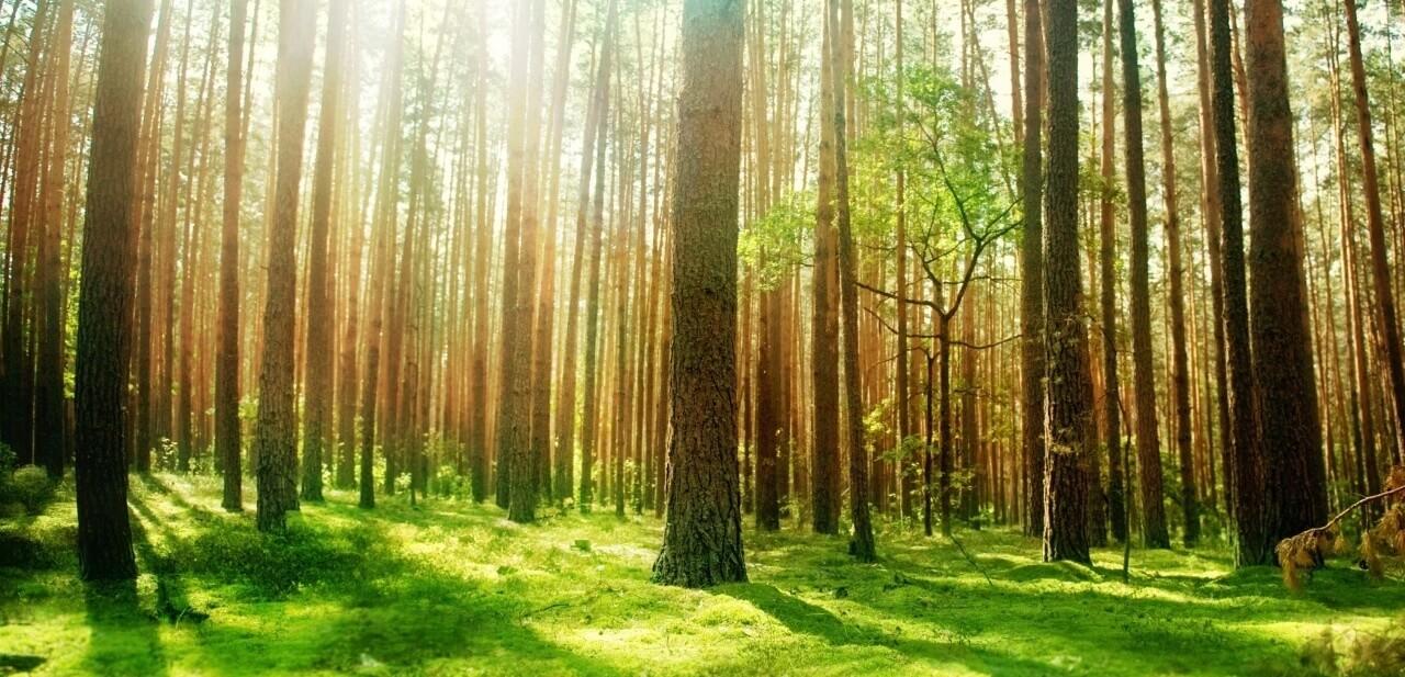 Cosa si Intende Per Biomasse Solide?
