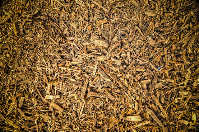 energia da biomasse vegetali