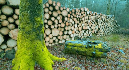biomasse in brasile