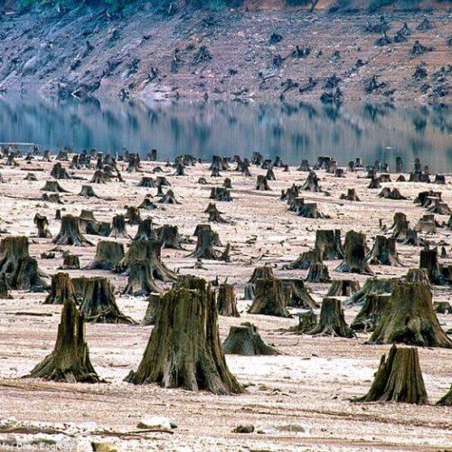 Cronaca Ambientale: Le Notizie che Riguardano l'Ecologia e L'Ambiente