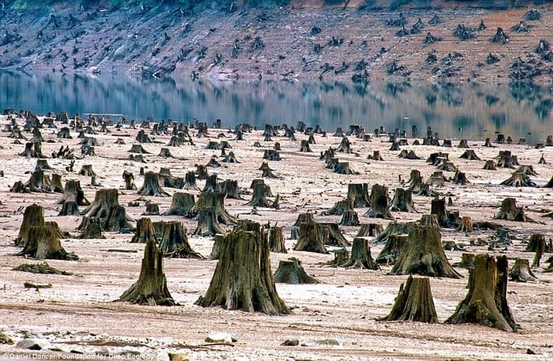 disastro ambientale alberi tagliati