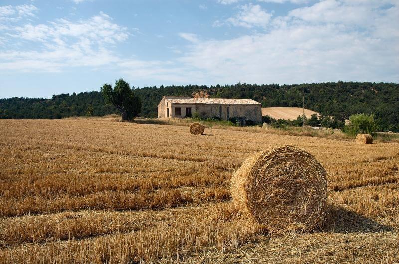 Energia da Biomasse: Cos'è, Come Funziona e Come si Produce