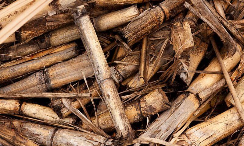 biomasse cosa sono